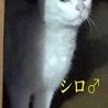丸顔で大きな瞳のイケメン白猫くんです! サムネイル2