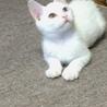 里親決定しました。 真っ白な3カ月の可愛い男の子☆ サムネイル2