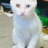 里親決定しました。 真っ白な3カ月の可愛い男の子☆ サムネイル4