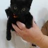 穏やかな2ヵ月の黒の女の子 サムネイル2