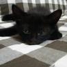 穏やかな2ヵ月の黒の女の子 サムネイル3