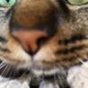たんたん保護猫レスキュー隊