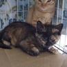 サビ猫カコちゃん、3ヶ月半 サムネイル2