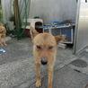 若い姉妹犬です・・・家族に迎えて下さい。 サムネイル3