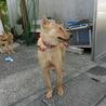 若い姉妹犬です・・・家族に迎えて下さい。 サムネイル4
