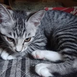 可愛い外ネコを家ネコにして下さい2