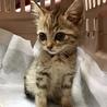 子猫の茶々丸です