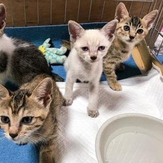 ⭐元気な保護猫の子猫3匹⭐