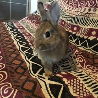 童顔なミニウサギの男の子