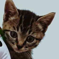 ☆島忠ホームズ茅ケ崎店横のトレーラーハウスで猫の譲渡会☆