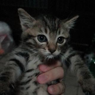 可愛い子猫の里親さん募集中です!