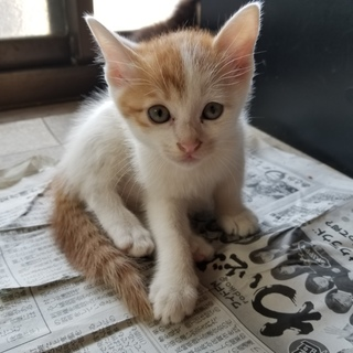 人馴れしててとても可愛い子猫です