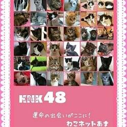 愛知県あま市で子猫50頭の譲渡会 ねこネットあま
