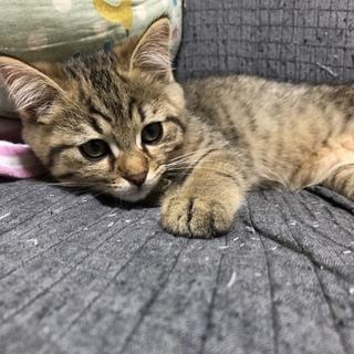 子猫が産まれました!
