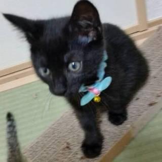 可愛い黒猫、男の子、家族募集中です!