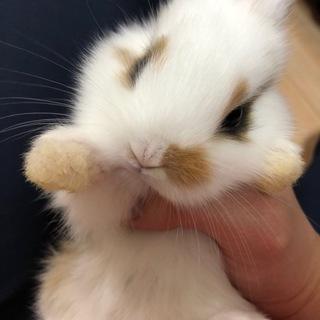 5月23日生まれの子ウサギ 2