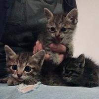 子猫3匹キジトラ?