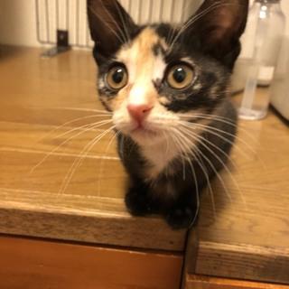 美猫のあずきちゃん