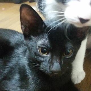 キレ長の目がカッコいい !!  黒猫くん☆