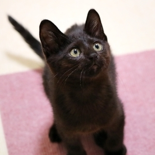 尻尾の長い黒猫くん