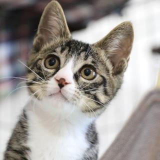 保護猫ユズル君、お鼻の柄がチャームポント!