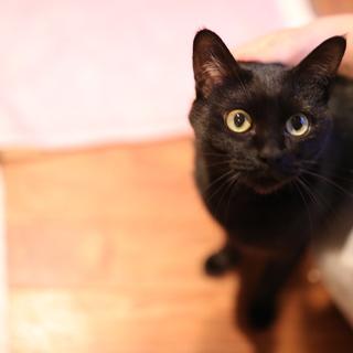 甘えん坊でかわいい、黒猫の女の子。