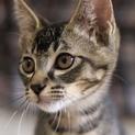保護猫ダイスケ君。優しい性格。抱っこが大好き!