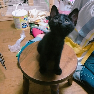 めちゃめちゃ可愛い黒猫園子さん