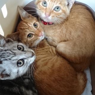 子猫4頭と母猫1頭里親募集!