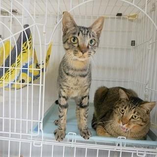 ☆他の猫と仲良し☆動画あり