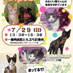 『ワッショイ子猫祭り里親会!大人猫もね!』