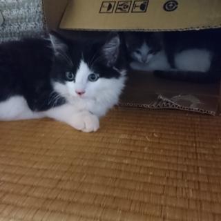 4月産まれの子猫で。