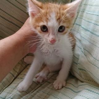 野良子猫保護しています。