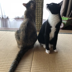 見上げる2匹・・・そして脚黒猫 リターンズ