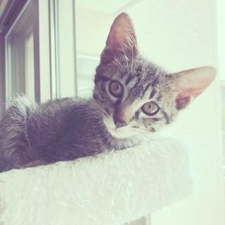 美形仔猫姉妹です