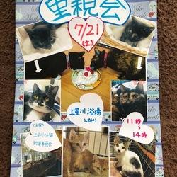 横浜 上星川 保護子猫 譲渡会