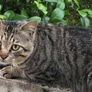 保護猫くんの里親さん募集