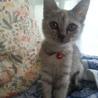 里親募集中。元気で可愛い子猫です。