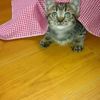可愛い子猫 2ヶ月位