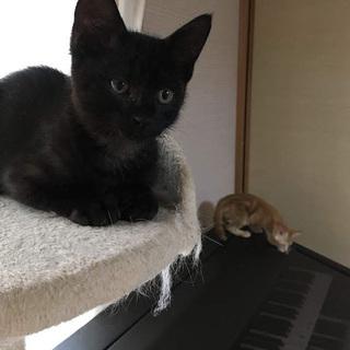 人が大好きなトラ柄黒猫の子猫❤️