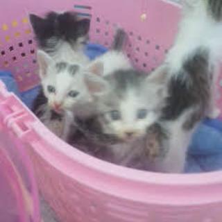 車から投げ捨てられた子猫たち