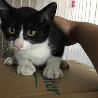 推定3ヶ月〜4ヶ月。ハチワレと真っ黒のオス子猫