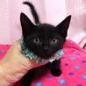 なれなれ黒子猫☆ナノくん 2ヵ月 サムネイル3