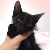 なれなれ黒子猫☆ナノくん 2ヵ月 サムネイル4