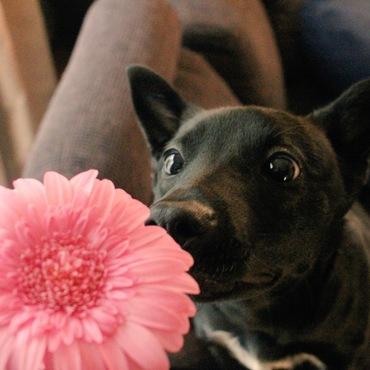 お花食べないの!