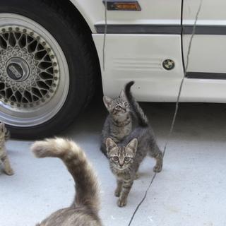 子猫3匹里親募集