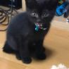 黒猫の子猫くん 約2カ月 宜しくお願い致します!