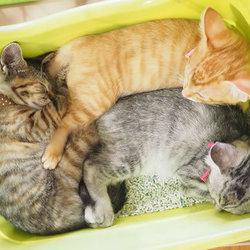 8月4日(土)「子猫まつり第3弾」・愛知県みよし市