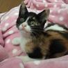 保護猫リコちゃん3ヶ月