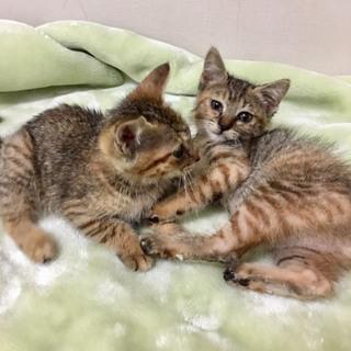 仲の良いサビキジの2姉妹♀♀